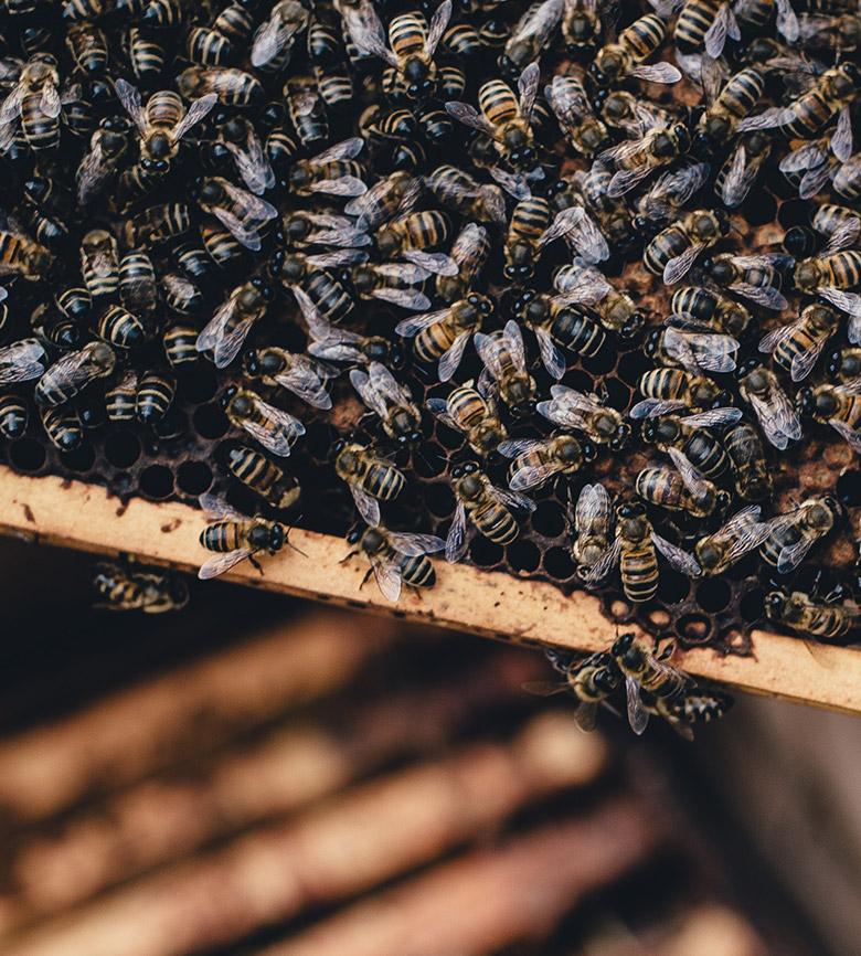 honey-pic20